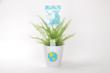 Look for these Plant Party containers with stickers all through the month of April at your local home improvement store!