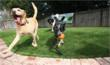 EasyTurf's Community Pet Rescue and Animal Outreach Program Provides Non-Profits With New Donation Source