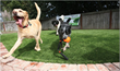 EasyTurf Showcases Pet Turf at L.A. Doggie Street Fair