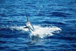 Costa Rica sportfishing