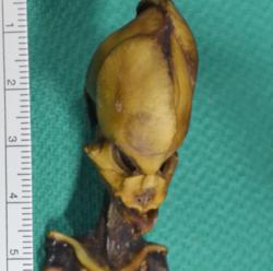'Ata' - The Atacama Humanoid