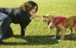 VPI Pet Insurance Celebrates 6th Annual Pet Parent's Day® on April 28