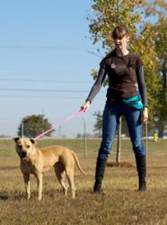 Dogington Post and Merrick Pet Care Offer Free, Live Dog Training Seminar with Victoria Stilwell
