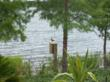 Wood Ducks on top of the nesting box at Lake Holden installed by Fender Marine Construction