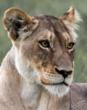 Images in Africa Safaris Reviews Cheetah Plains Private Game Reserve