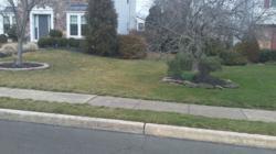 Lawn Treatment Program Comparison
