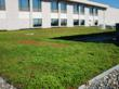 Providence St. Mary Green Roof