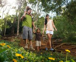 A family enjoys a day hike on the Nounou Forest Reserve Trail on Kauai