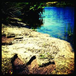 Winky Studmire's Snapshot of Dinosaur Tracks