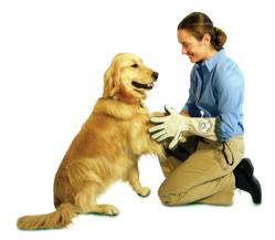 Spotless Paw Glove