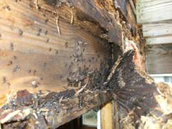picture of termite damage