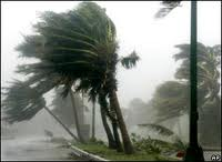 picture of palm trees blowing from hurrican