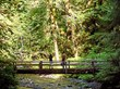 Hikers enjoy Olympic National Park's Marymere Falls (photo courtesy of Port Angeles Chamber of Commerce)