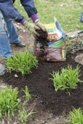 Mulch prevents weeds for easy maintance.