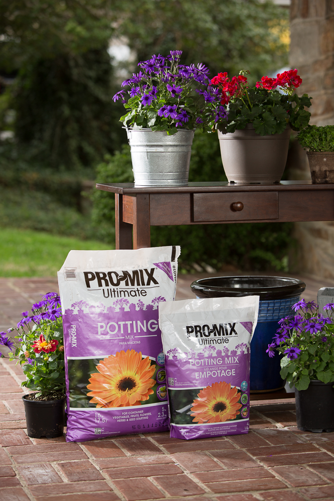 May is the month for container gardening - Best potting mix for container gardening ...