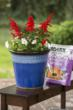 Create a stunning Memorial Day container with PRO-MIX growing mixes