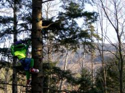 Arbor the Frog climbs high into an eastern hemlock at ArborTrek Canopy Adventures at Smugglers' Notch