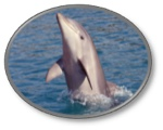 We offer two affordable Hilton Head Dolphin Cruise packages