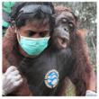 Orangutan Rescued in Borneo