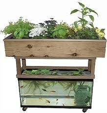 A Truly Organic Garden - aquaponic garden
