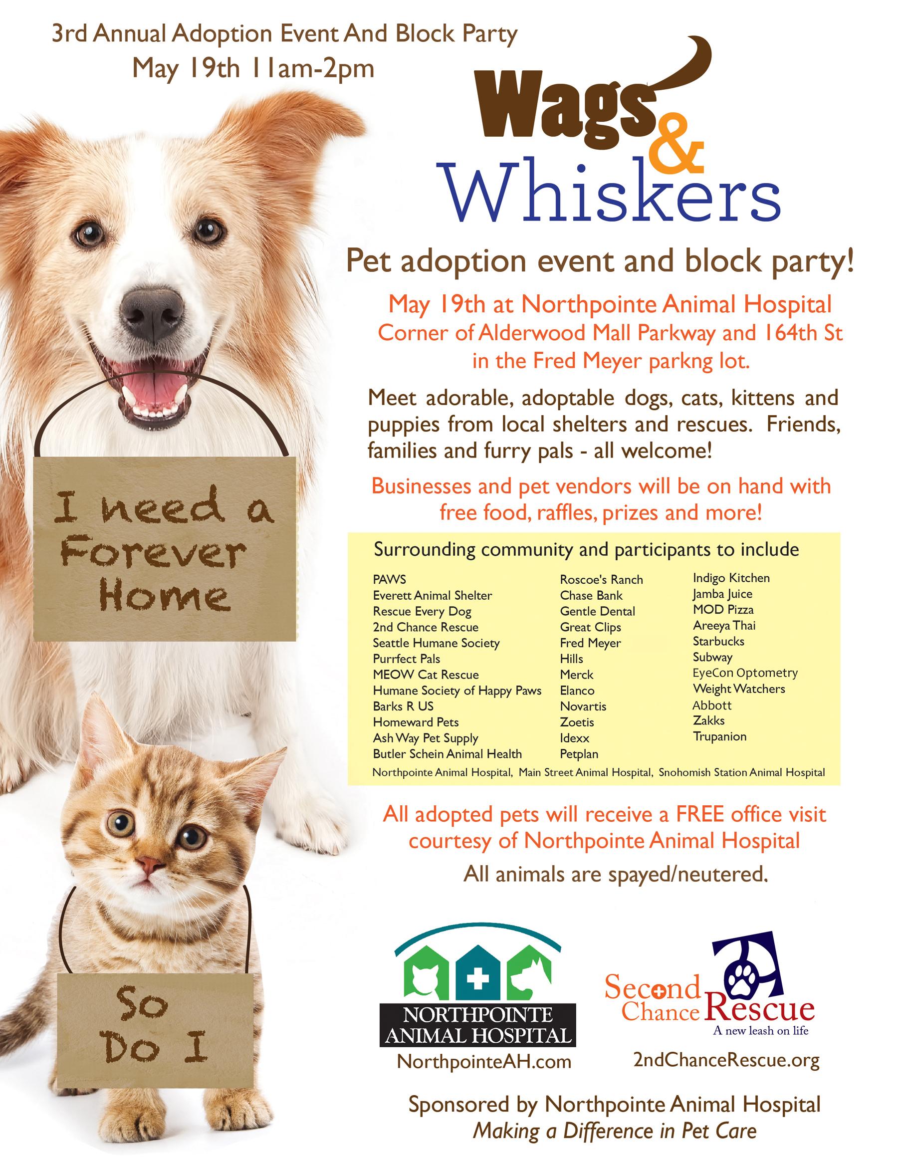 Dog Rescue Center Volunteer