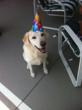 Healthy Dog Treat Maker, Pupolicious, Announces Healthy Dog Treats Now for Every Dogs' Next Birthday Party