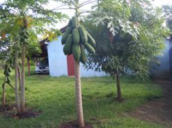 Leon Nicaragua Real Estate