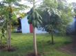 Farm in Leon Nicaragua Real Estate for Sale Announced by Real Estates...