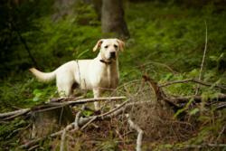 High level of Lyme disease concern among pet parents nationally