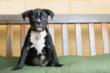 East Bay SPCA Offers Discounted Puppy And Kitten Total Wellness...