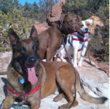 Give A Brand! 2013 Finalist - All Breed Rescue And Training