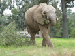 Oakland Zoo Hosts Guest Speaker and Silent Auction in Honor of Elephants