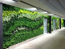 GSky Living Green Wall Atlanta Office