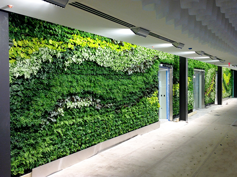 Gsky installs massive green wall in atlanta area office of for Living plant walls