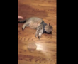 "Cool Cat's ""Flop and Freeze"" in a ThunderShirt Goes Viral"