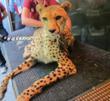 """Johari At Infinite Safari Adventures' @ 2nd Annual  """"Meetah Cheetah"""" Event"""