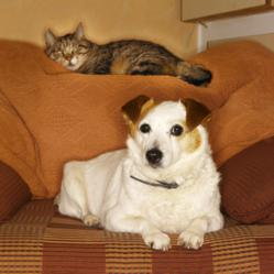 House calls provide familiar surroundings during veterinary care.