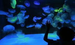 Portland Aquarium - Free Admission for Foster Children