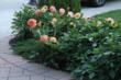 Greet guests with inviting borders of color with dahlias