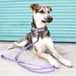 Mimi Green Releases New Designer Dog Collars with Reflective Ribbon Safety Feature