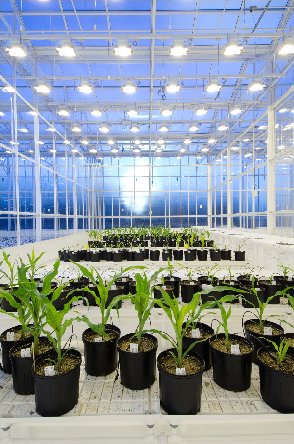 Syngenta Opens Unique 72 Million Advanced Crop Lab