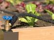 Garden Revival: Gardening Expert Melinda Myers Shares Tips for Helping...