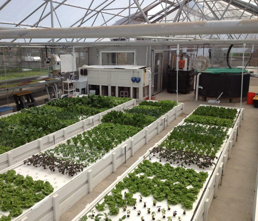 Green acre aquaponics introduces a revolutionary approach for The aquaponic source