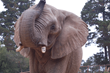 Oakland Zoo Presents Day to Celebrate Elephants