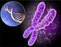 Cytogenetic studies @ EurekaMag.com
