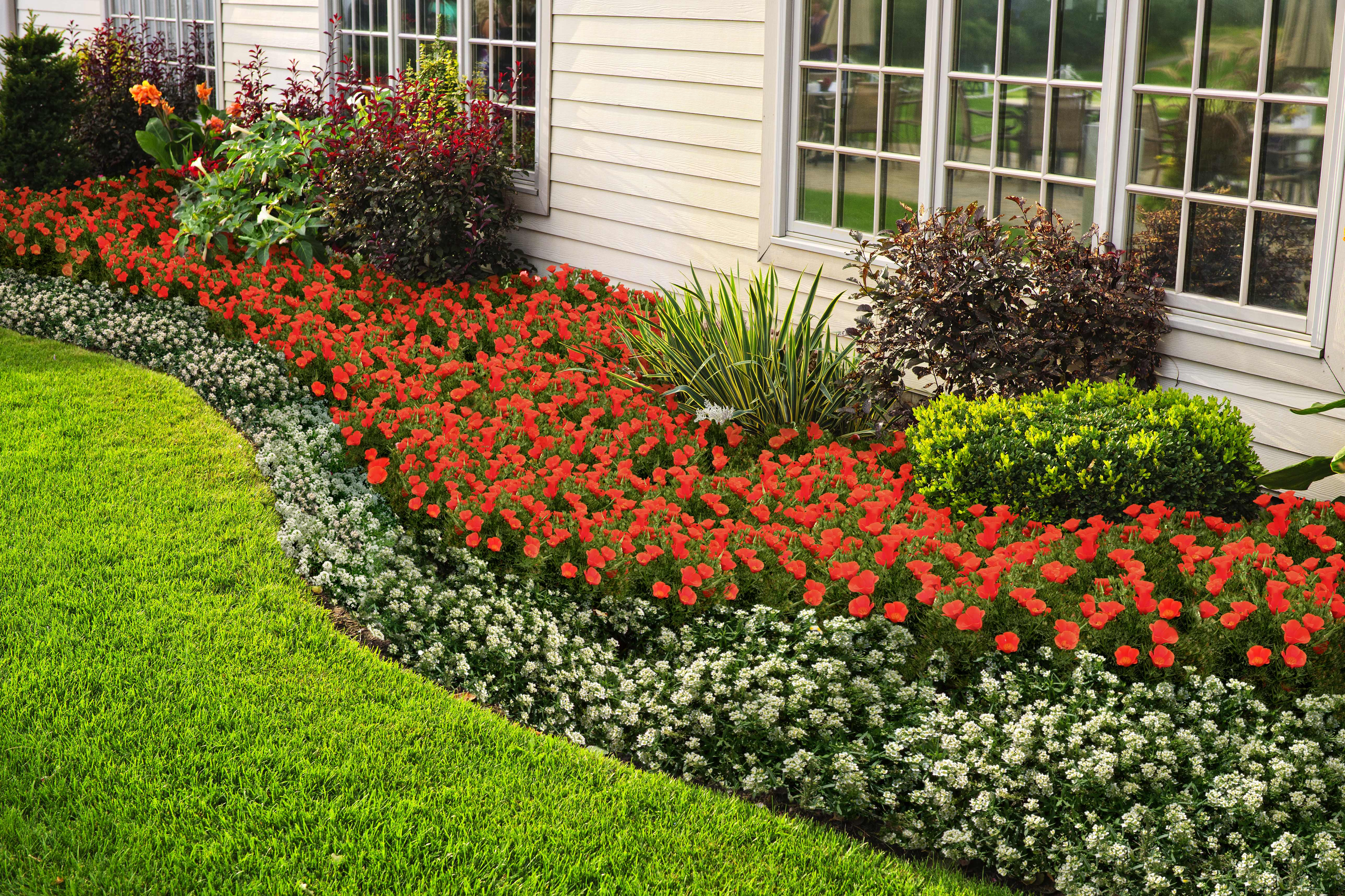 New Gardening Innovation Easily Creates Flowering, Living Mulch Beds