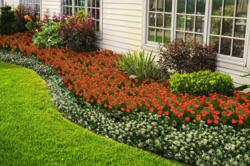 Mulch that adds color and function