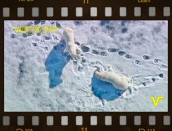 Aerial footage from the Arctic - part of the all HD video footage library at VideoFort.com