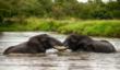 Image by Gavin Slabbert Images in Africa Safarishttp://imagesinafricasafaris.com
