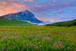 Colorado's Crested Butte Wildflower Festival Salutes Nature's Explosion of Color